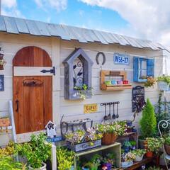 多肉植物/花と緑のある暮らし/DIYガーデン/小屋風/ウッドフェンス/ベランダガーデニング/... こんばんは🎵 晴れた日のガーデンフォト📸…