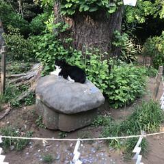 江ノ島/猫/おでかけ 江ノ島の猫さん!行きも帰りも同じ場所に居…