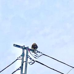 お出掛け/カメラ目線/江ノ島/風景/おでかけワンショット 江ノ島で優雅に旋回していたのが私の前にあ…