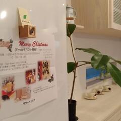 ハンドメイド/自然素材/無垢/杉/マグネット/カード/... 無垢の杉材でマグネット付ウッドキューブの…