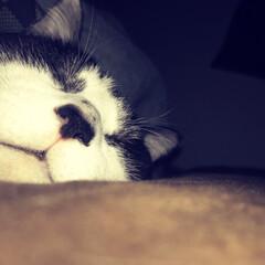 腕枕/布団/ペット 起きたら隣にこの顔。 私の腕に乗って、さ…