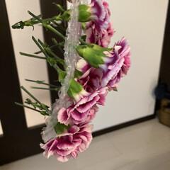 花のある生活/イケア/IKEA/花瓶/アレンジ/枯れる前に/... ちょっと元気がなくなってきたので、フロー…(6枚目)