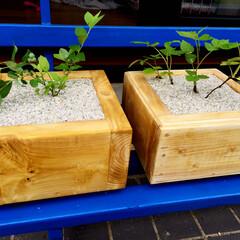 木製プランター/リノベーション 木製のプランター。ブルーベリーとラズベリ…