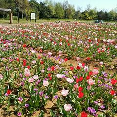 フラワーガーデン/花/植物園/ガーデン/湘南/おでかけ/... 神奈川県平塚市にある 植物園【花菜ガーデ…
