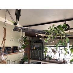 滑車/古道具/電球ガーランド/ポトス/アイアン/吊り棚/... 天井に吊り棚欲しくて 庭にあったアイアン…