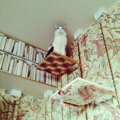 猫/キャットウォークDIY/ディアウォール/輸入壁紙/サンダーソン 壁紙キャットウォークDIY