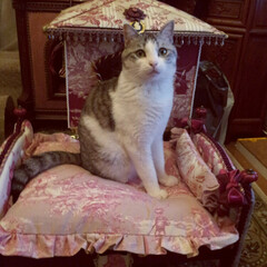 カルトナージュ/猫/猫家具/フランス生地/IKEAドールベッド/リメイク/... カルトナージュの猫ベッドと猫ハウス。