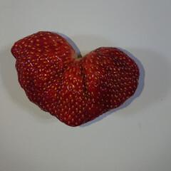 季節/甘い/ハート/イチゴ