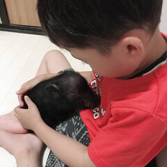 黒/動物/黒豚/かわいい/ペット/とんこ/... 家族が増えました ミニぶたの とんこちゃ…