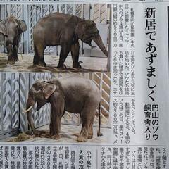 北海道/方言/ぞうさん/円山動物園/ぞうさんが🐘来たニュースなんだけど 札幌の円山動物園にぞうさんが🐘来たってニ…
