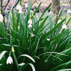 春のフォト投稿キャンペーン/はじめてフォト投稿 散歩中に咲いてる花を撮ってみました^ -…