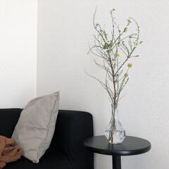 ミニマリスト/ミニマリスト目指します/ミニマル/モノトーンインテリア/シンプルインテリア/海外インテリア/... お正月用に買ったお花が咲いてきました☺︎…