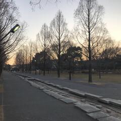 並木道/公園/散歩/LIMIAおでかけ部/おでかけ/風景/... 冬の散歩道。 今日は暖かかったですね☺︎…