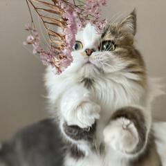 ペットと暮らす家「house-zoo」/ねこ/ペット/猫/動物モチーフグッズ/おしゃれ/... お花も可愛いけど、わたしもね。
