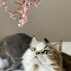猫/ペット/ねこ/ペットと暮らす家「house-zoo」/暮らし/玄関あるある