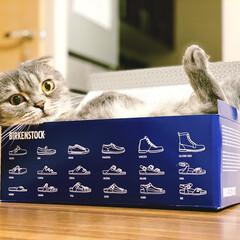 もふもふ部/猫が好き/ねこ/猫/暮らし 猫は箱が好き。