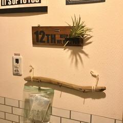 収納アイデア/収納術/壁掛けフック/流木/壁面収納/DIY/... 脱衣所の壁面収納♪ 流木で作った 壁掛け…