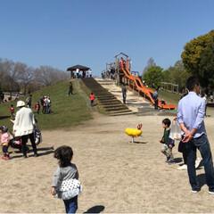 おでかけワンショット/公園/公園日和/いい天気/お出かけ/こどものいる暮らし/... 今日は公園日和✨ お弁当を持っておでかけ…(4枚目)