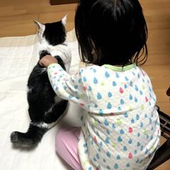 ちぎりパン/手作りパン/鉄板レシピ/愛猫/ペット/猫/... 先日の連休は実家に帰省したので、お土産に…(3枚目)