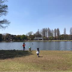 おでかけワンショット/公園/公園日和/いい天気/お出かけ/こどものいる暮らし/... 今日は公園日和✨ お弁当を持っておでかけ…(2枚目)