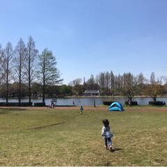 おでかけワンショット/公園/公園日和/いい天気/お出かけ/こどものいる暮らし/... 今日は公園日和✨ お弁当を持っておでかけ…(3枚目)