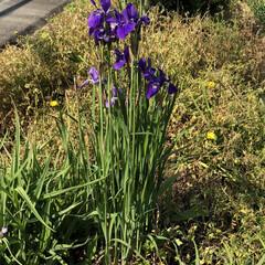 春のフォト投稿キャンペーン お花