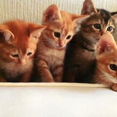我が家のアイドル 初めて家で産まれた4匹 皆んなが一緒に撮…