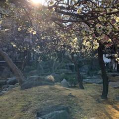 御朱印/おでかけ/旅行/風景 湯島天満宮  梅まつり  天気の良い日で…(5枚目)