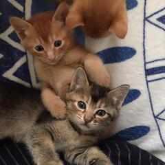 我が家のアイドル 初めて産まれた仔猫達  皆んなそれぞれに…