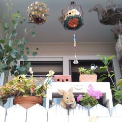 ガーデン 自宅のミニミニガーデンです♬外から可愛く…