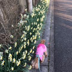 春/散歩/LIMIAペット同好会/LIMIAおでかけ部/フォロー大歓迎/ペット/... 今日はとっても暖かくて 久しぶりにモカ🐶…