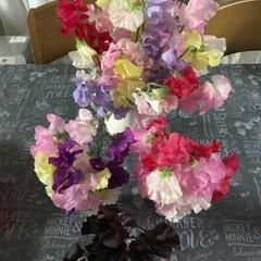 スイトピー/春の香り/小さい春 毎年、岡山の親戚から スイトピーが届きま…(2枚目)