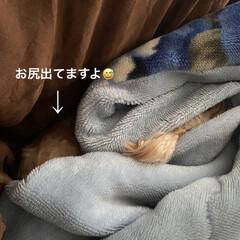 カバーアルバム/hiro/モカさん🐶/マルプー こんにちは😊 今朝はまた冷え込んで雪がう…(4枚目)