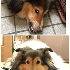 怖い顔/かわいい/ペット 見てください〜同じ犬とは 思えないでしょ…