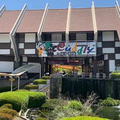 旅行 今日は朝から 熊本にあるカドリードミニオ…