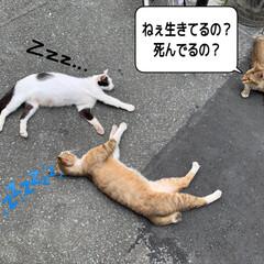 猫の生活 今日は風があって過ごしやすいのか道の真ん…