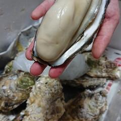 令和の一枚/LIMIAごはんクラブ/おうちごはんクラブ/令和元年フォト投稿キャンペーン/牡蛎/ガーリックソテー/... 昨日実家からもらった牡蛎を頑張って調理。…