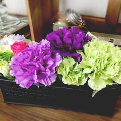 花言葉は永遠の幸せ/ムーンダスト/母の日 ムーンダスト 花言葉は永遠の幸せ ハッピ…