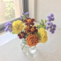 花/秋/風景/インテリア/住まい 学校の花植えボランティアに参加させていた…(1枚目)