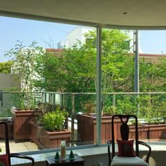 外構/お庭/エクステリア/植栽/ガーデニング リビングからのマンションバルコニー ウリ…
