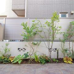 外構/一戸建て/新築/植栽/ガーデニング/アプローチ/... タイル貼りアプローチの脇に緑をプラス。モ…