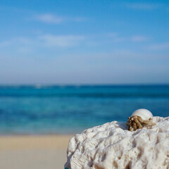 珊瑚/ヤドカリ/海/沖縄/おでかけ ヤドカリさん