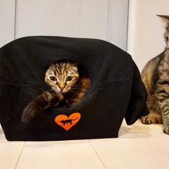 猫ハウス/猫/ペット/100均/ダイソー/ハンドメイド ダンボールと針金ハンガーとTシャツで猫ハ…
