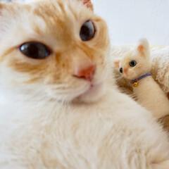 羊毛フェルト/猫/ペット/ハンドメイド 羊毛フェルトでうちの子