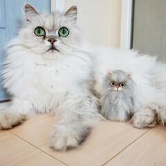 羊毛フェルト/猫/ペット/ハンドメイド 羊毛フェルトでうちの子 長毛は特に難しか…