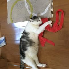 フローリングも好き/アカスリタオル/猫あるある 何故かおとーさんのアカスリタオルが好きで…