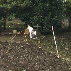 脱走/ペット 朝窓開ける時油断してたら脱走して隣の畑に…
