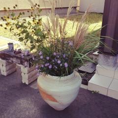 穴窯/野の花/陶器/陶芸/グリーン/玄関/... 穴窯で焼いた陶器の壺 * 野の花を息子と…