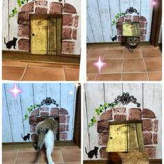 ニャンコドア/LIMIAペット同好会/ペット/ハンドメイド/犬/猫/... 猫ちゃんはドアを開けて出てくけれど閉めて…
