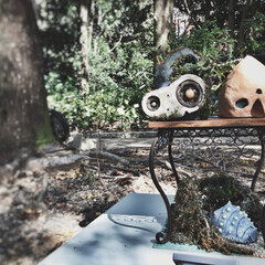 ジブリ鉢/ハウステンボス/多肉植物/ロボット兵/王蟲/巨神兵 ⌘ハイステンボスの世界フラワーガーデンシ…